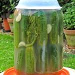 Kenyérrel kovászolt uborka 1